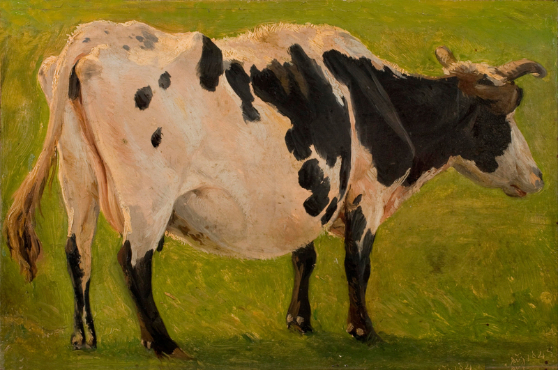 Carlo Dalgas - Black and white cow standing-1